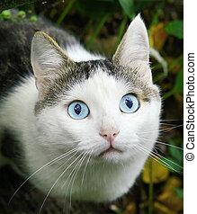 blue eyes cat close up summer portrait