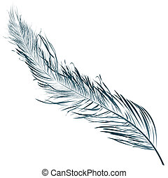 Blue feather, hand drawn object against white