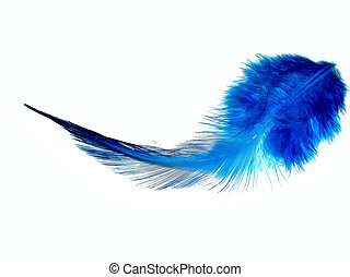 Blue feather - Isolated single blue feather on a white...