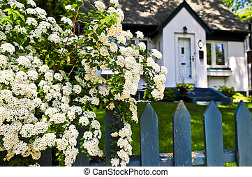 Blue fence with white flowers - Blue picket fence with...