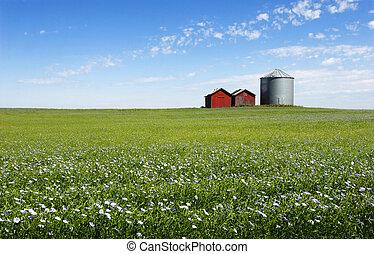 Blue Field - Flax field, silo and blue sky