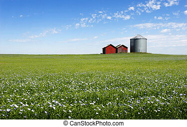 Blue Field - Flax field, silo and blue sky