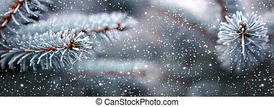 Blue fir tree branches with snowfall.