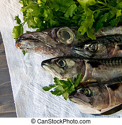 blue fish just caught fresh great for a healthy diet