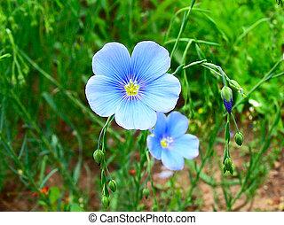 Blue flax on green background closeup