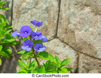 blue flower a wall background