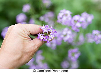 blue flower in hand on nature