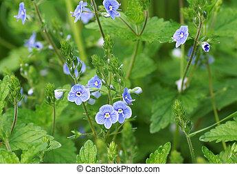 Blue flower in the garden.