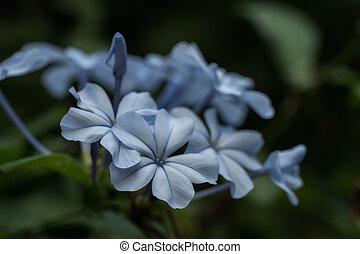 Blue flower in wonderful light