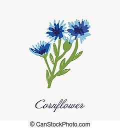 Blue Flower of Cornflower, isolated on white background. Vector hand drawn botanical illustration