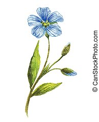 Blue flower of flax . Wild flowers. Watercolor floral ...