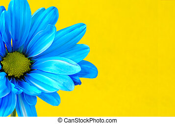 Blue Flower on a Yellow Background