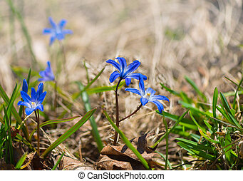 Blue flower on grass floor