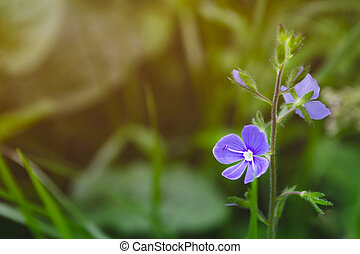 Blue flower on green blurred background. Macro shot