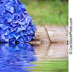 blue flower with reflection in water
