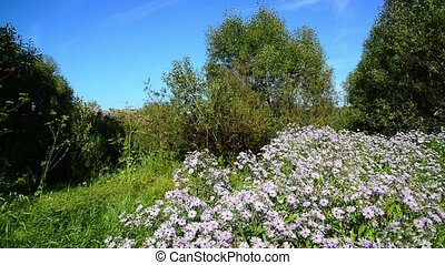 Blue flowers at the edge of forest - blue flowers at the...