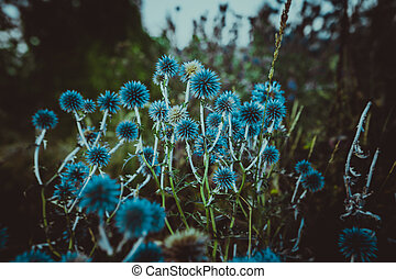 Blue flowers Echinops on a nature background
