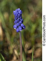 Blue flowers in the field.