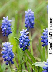 blue flowers in the field
