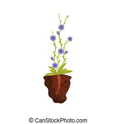 Blue flowers on a thin stalk. Vector illustration.
