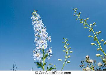 blue flowers under sunny sky