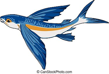 flying fish - Blue flying fish on a white background.