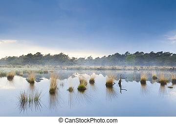 blue fog over swamp in Drenthe after rain