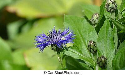 blue garden flower and bee