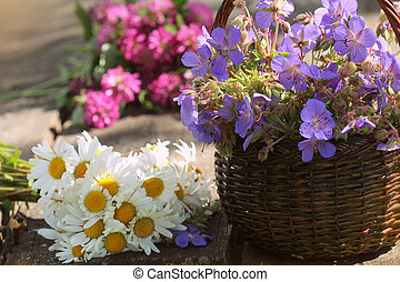 Blue geranium, clover, camomile. Herbs harvesting of...