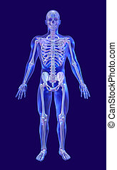 Blue Glass Man with Iridescent Skeleton - A blue glass man...