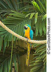 Blue & Gold Macaw sitting on a rope