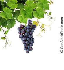 Blue grape and grapevine
