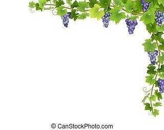 Blue grape branch in corner.
