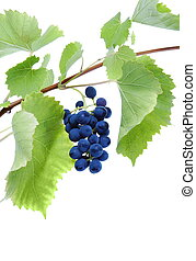 Blue grape cluster with leaves