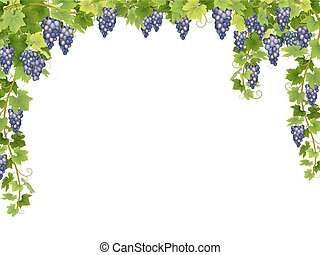 Blue grape floral frame - Frame from hanging bunches of ripe...