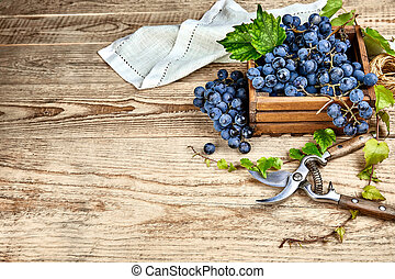 Blue grapes in box with willow green