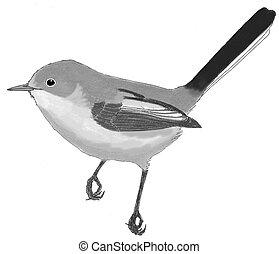 blue-gray, gnatcatcher