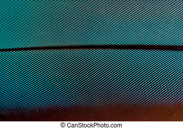 Blue Green and Burgundy Feather Pattern Macro for Backgrounds