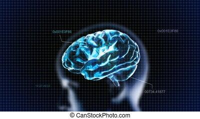 blue head brain with code