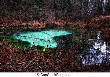blue heart of dark forest