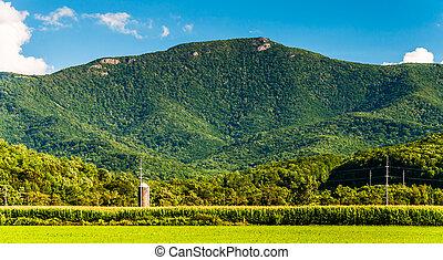 blue hegy, hegygerinc, tanya, megfog, shenandoah, virginia., völgy, kilátás