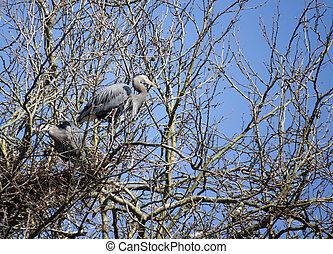 blue heron in tree by lost lagoon