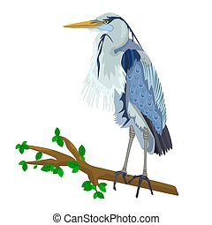 Blue Heron on tree branch isolated on white background.