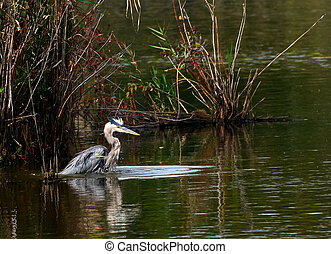 Blue Heron Pond