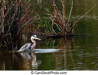 Blue Heron Pond
