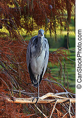 blue heron rest on the branch in the park