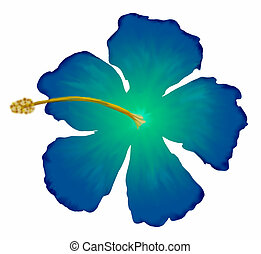 A drawing of a blue hibiscus flower.