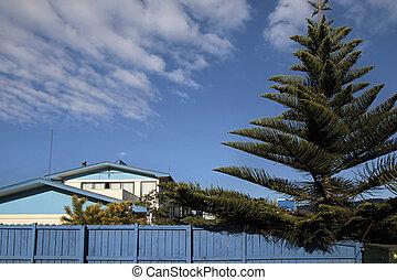 Blue house with Norfolk pine in Garden