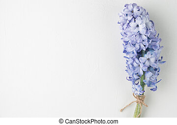 Blue hyacinth flower on white background with copy space.