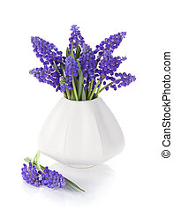 Blue hyacinth flowers in a vase. Isolated on white background